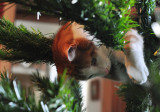 And a cat in the Christmas tree.