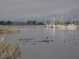 Day 11 - Santa Cruz to Monterey CA
