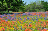 Wild Flowers in The Hill Country And A Few Other Things