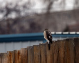 hawks_eagles_falcons