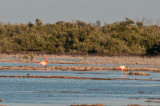 44-DSC_1503-Flamingoes.jpg