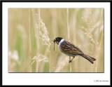 small_birds_2008