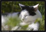 black and white cat.jpg