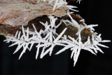 Hoar frost on tree bark