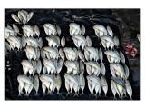 Fish market Part 6