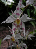 1_6_Orchids at Jardin Botanical de Quito.JPG