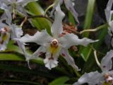 1_7_Orchids at Jardin Botanical de Quito.JPG