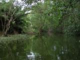 6_2_Mangrove lagoon.JPG