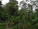 6_4_Rainforest vegetation.JPG