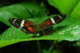 6_8_Butterfly spp.JPG