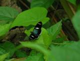 6_9_Butterfly spp.JPG