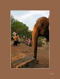 24 Trompa de elefante.jpg