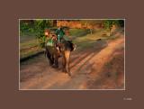 58 Sombre de elefante.jpg