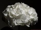 Hortensia_8222008_c1_c.jpg