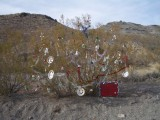 ... more Christmas decorationson the way to Oatman ...