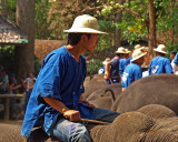 Eye candy: young mahout