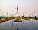 Floating fields