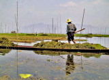 Farmers working the fields