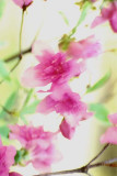 pastel blossoms.jpg