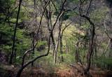 greening wood.jpg
