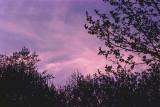 spring sky.jpg