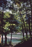river and trees.jpg