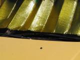 gold shade.jpg