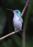 Andean Emerald  011210-3j  Septmo Paraiso
