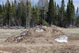 Grass covered snow 2009 May 31st