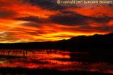 Bosque del Apache, White Sands & VLA