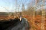 Promenade hivernale sur les buttes de Rosne