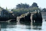 Sur le golfe du Morbihan en semi-rigide - MK3_9387 DxO Pbase.jpg