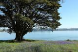 Sur le golfe du Morbihan en semi-rigide - MK3_9461 DxO Pbase.jpg