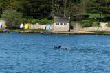 Sur le golfe du Morbihan en semi-rigide - MK3_9625 DxO Pbase.jpg