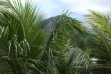 2 weeks on Mauritius island in march 2010 - 124MK3_7945_DxO WEB.jpg