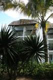 2 weeks on Mauritius island in march 2010 - 155MK3_7976_DxO WEB.jpg
