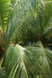 2 weeks on Mauritius island in march 2010 - 203MK3_8025_DxO WEB.jpg