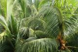 2 weeks on Mauritius island in march 2010 - 205MK3_8027_DxO WEB.jpg