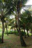 2 weeks on Mauritius island in march 2010 - 208MK3_8031_DxO WEB.jpg