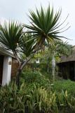 2 weeks on Mauritius island in march 2010 - 222MK3_8045_DxO WEB.jpg