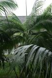 2 weeks on Mauritius island in march 2010 - 230MK3_8053_DxO WEB.jpg