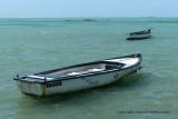 2 weeks on Mauritius island in march 2010 - 488MK3_8332_DxO WEB.jpg