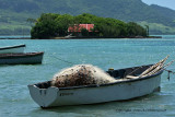 2 weeks on Mauritius island in march 2010 - 500MK3_8344_DxO WEB.jpg