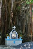 2 weeks on Mauritius island in march 2010 - 511MK3_8355_DxO WEB.jpg