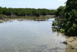 2 weeks on Mauritius island in march 2010 - 550MK3_8394_DxO WEB.jpg