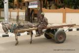 Louxor - 16 Vacances en Egypte - MK3_8852_DxO WEB.jpg