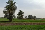 Louxor - 22 Vacances en Egypte - MK3_8858_DxO WEB.jpg