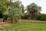 Louxor - 23 Vacances en Egypte - MK3_8859_DxO WEB.jpg