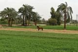 Louxor - 25 Vacances en Egypte - MK3_8861_DxO WEB.jpg