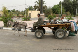 Louxor - 108 Vacances en Egypte - MK3_8948_DxO WEB.jpg